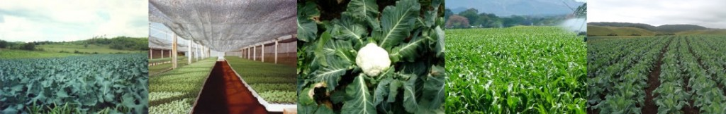 plant-1024x162