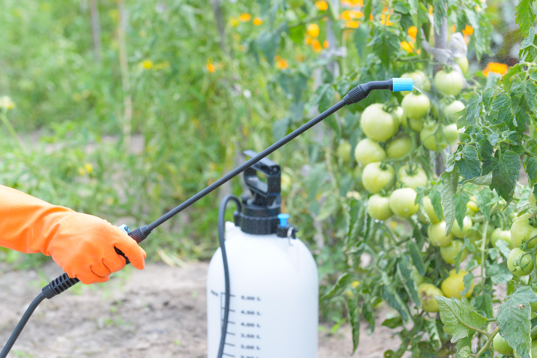 cba4fba67 Como preparar calda bordalesa – Canal do Horticultor