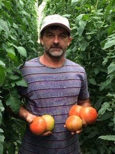 tomate cedro