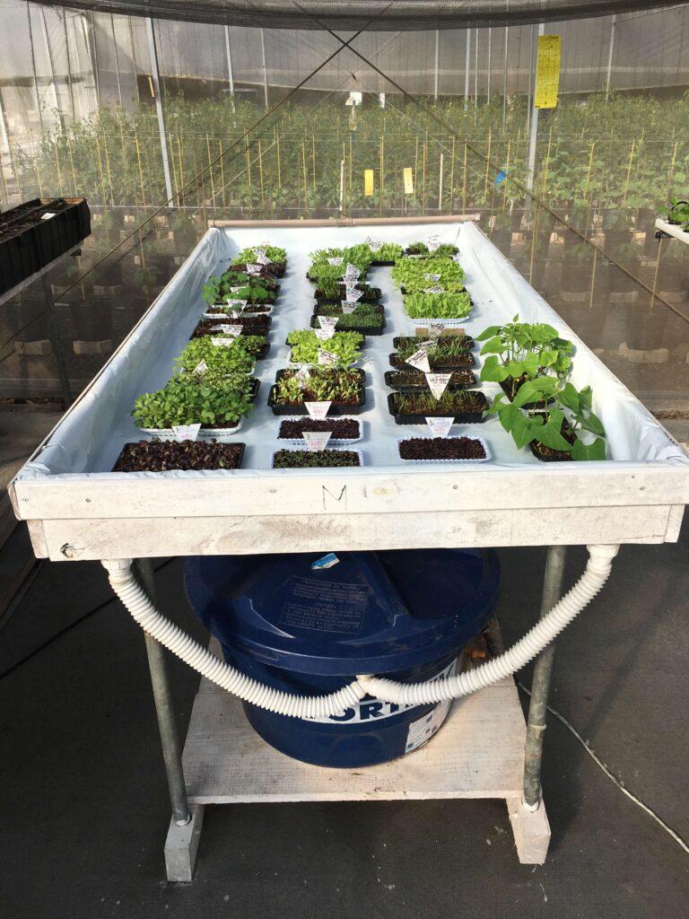 Bancada para produção de microverdes
