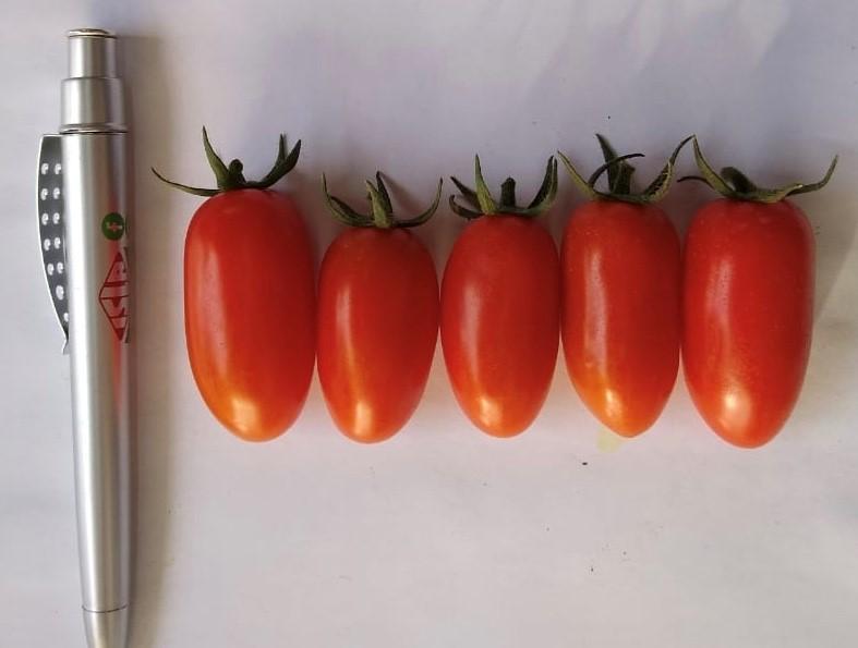 tomate sorbetto