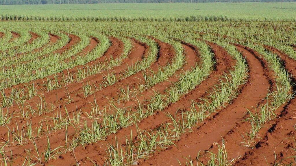 Cultivo em curvas de nível. Foto: Embrapa